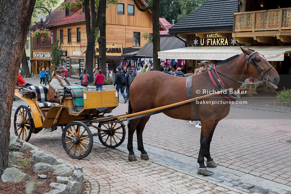 A Polish horse and carriage driver waits for customers wishing to ride up Krupowki Street, 17th September 2019, in Zakopane, Malopolska, Poland.