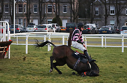 Jockey Alan Johns falls off Midnight Queen at the last hurdle in the Betway Novices' Handicap Hurdle at Musselburgh Racecourse.