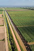 Sugar Cane production<br /> East Coastal area<br /> GUYANA<br /> South America