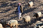 Beduine mit Schafherde in der Wüste, Negev, Israel.|.Beduine with sheep in the desert, Negev, Israel