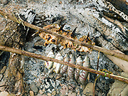 Freshly caught fish cooking over an open fire which the boatmen/fishermen caught by electric fishing in the Nam Ou river, Phongsaly province, Lao PDR. The Nam Ou river connects small riverside villages and provides the rural population with food for fishing. But this river and others like it, that are the lifeline of rural communities and local economies are being blocked, diverted and decimated by dams. The Lao government hopes to transform the country into 'the battery of Southeast Asia' by exporting the power to Thailand and Vietnam.