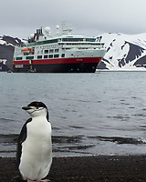 Chinstrap Penguin (Pygoscelis antarcticus). Half Moon Island. Image taken with a Leica T camera and 18-56 mm lens.