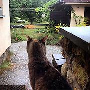 Speedy cat observing her living room which is underwater at the moment. #prag #praha #prague #czechrepublic #garden #speedy #cat #outside #katze #animal #smart #waiting #rain