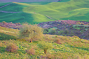 Rolling Grasslands of Palouse Washington