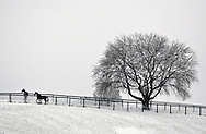 Two horses stand in a snow-covered field on a farm in the Town of Hamptonburgh after a winter storm on Wednesday, Jan. 7, 2009.