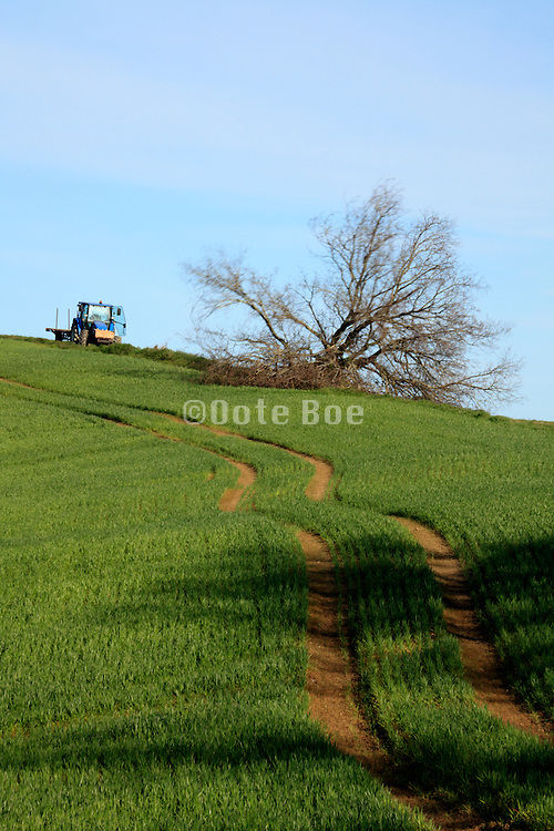 just cut down tree in rural agricultural landscape
