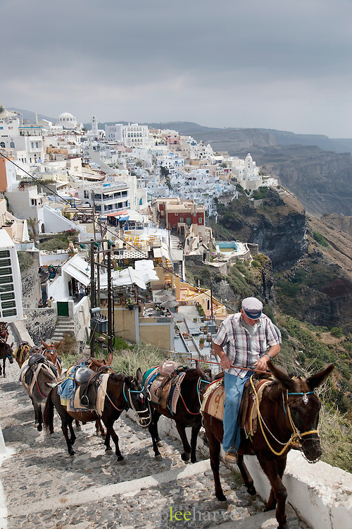 A man leading a group of donkies up the steps in Oia, Santorini, Greece, where tourists can enjoys rides and tours.