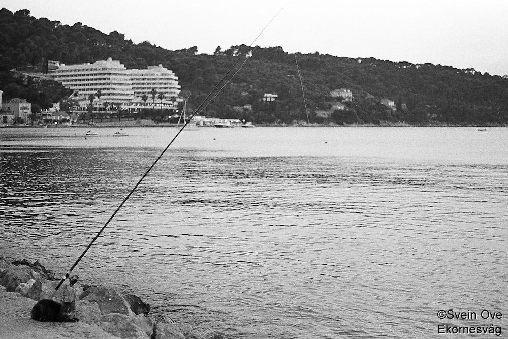 Kroatia 2012-06.<br /> En katt venter på fersk fiskemiddag ved sjøen på Lopud i Kroatia.<br /> Foto: Svein Ove Ekornesvåg