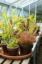 Carnivorous plants in the greenhouse at Down House - Darwin's House