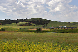 Scenic view of the prairie of South Dakota highlighted with the vibrant yellow blooms of the goldenrod and a nice bright blue sky with cotton ball clouds.