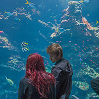 Visitors admire fish swimming in one of the large tanks at Steinhart Aquarium at the California Academy of Sciences in Golden Gate Park, San Francisco, California.