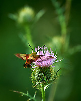 Sourland Mountain Preserve. Summer Nature in New Jersey. Image taken with a Nikon D4 camera and 80-400 mm VRII lens