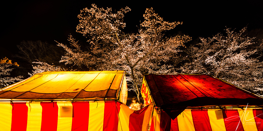 During Sakura Blossom in Japan, its very common seeing food and mini game stalls setting up around Sakura hotspot, add much festive atmosphere.