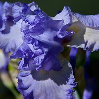 Flowers 2012<br /> 1st Edit 8/27/19