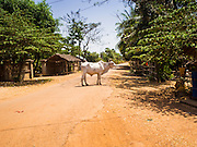 27 FEBRUARY 2015 - PONHEA LEU, KANDAL, CAMBODIA:     PHOTO BY JACK KURTZ