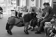 Petpals taking the pony Bailey to visit the residents of Inglewood nursing home in Eastbourne. 10 January 2019
