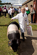 Imogen Sutcliffe with saddle back. The hairdryers are out and the shampoo is flowing at the Great Yorkshire Show, one of Britain's biggest agricultural shows. Its famous for its competitive displays of livestock. The event, established in 1837, attracts over 125 000 visitors a year and has over 10 000 entries to its pedigree competitions ranging from pigeons and rabbits to bulls and shire horses. At the heart of the show is the passion of the exhibitors who spend hundreds of hours ( and pounds)  training, preparing and grooming their animals.