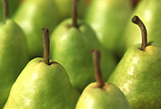 Close up selective focus photograph of some Bartlett pears