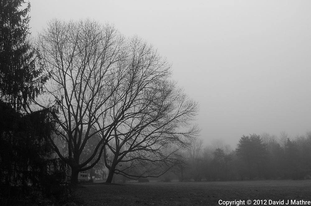 Foggy Morning. Late Fall in New Jersey. Image taken with a Leica X2 camera (ISO 800, 24 mm, f/5.6, 1/400 sec). Out of the camera B&W (high contrast) jpg image.