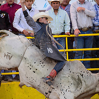 Bull rider Lane Granger springs from the chute in first qualifying ride of the Navajo Nation Fair in Window Rock Thursday.