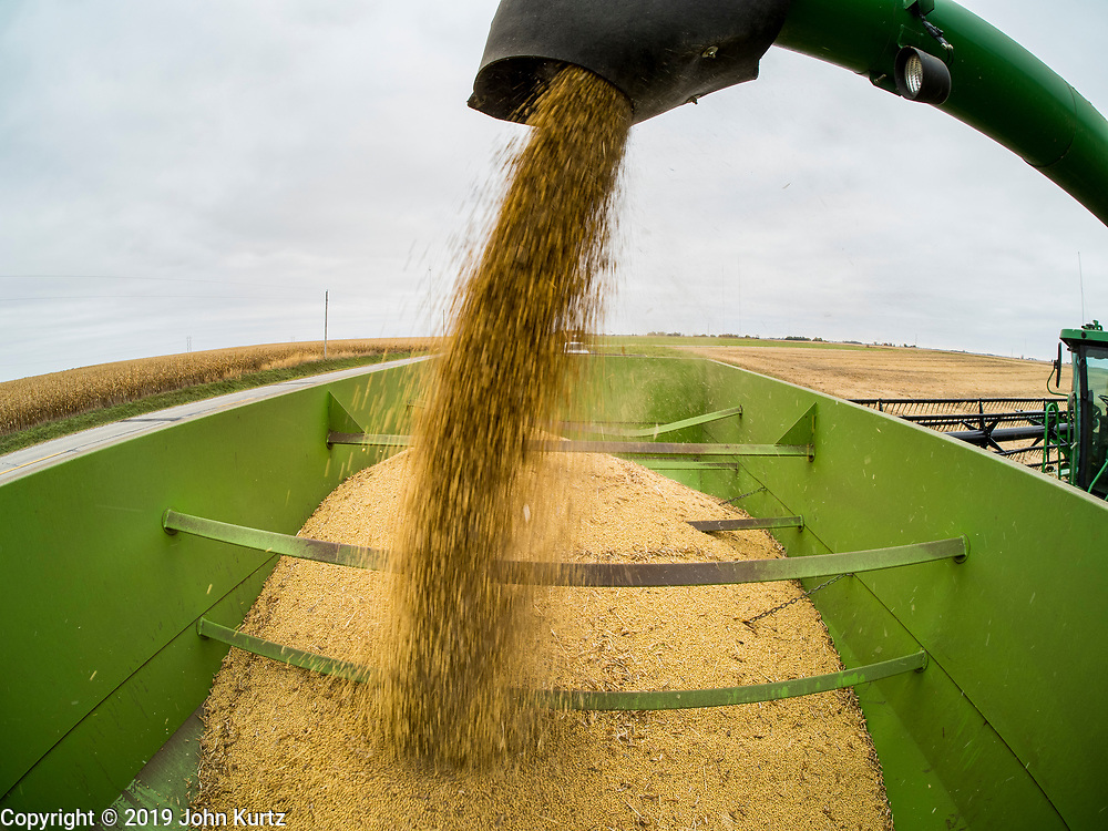 27 OCTOBER 2019 - POLK CITY, IOWA: AARON LEHMAN, President of the Iowa Farmers Union, empties harvested organic soybeans from his combine into a trailer on his farm near Polk City, Iowa. Iowa farmers have been weeks behind schedule through most of the 2019 growing season. A cold, wet spring across most of the state delayed planting by about 2 weeks. A historically wet October has pushed back the harvest of soybeans and corn by up to 3 weeks. Lehman said he's two weeks behind on his soybean harvest and further behind on corn. The USDA said about 30% of the soybeans have been harvested, and only 15% of the corn has been harvested. Central Iowa normally gets about 2.6 inches of rain in October, this year central Iowa has received about  7.3 inches of rain. Some parts of central Iowa are expecting up to 3 inches of snow later this week, further pushing back the harvests. This year has been the wettest year on record in Iowa. Farmers have also been contending with low prices, brought on by trade war between the US and China. The Chinese government put retaliatory tariffs on US agricultural products, including soybeans, corn, and pork, all important Iowa agricultural products. Soybean prices have fallen by as much as 20%.            PHOTO BY JACK KURTZ