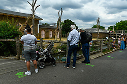 © Licensed to London News Pictures. 15/06/2020. LONDON, UK. Visitors, next to social distancing signs, view giraffes, Mollie and Maggie, on the reopening day of ZSL London Zoo, the first day that the zoo has been open to the public since March following the coronavirus pandemic lockdown. The staff have applied social distancing signage around the premises for the safety of visitors. The UK government has relaxed Covid-19 restrictions allowing non-essential shops, zoos and safari parks to reopen to the public from 15 June.  Photo credit: Stephen Chung/LNP