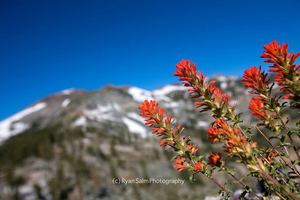 A view of Headwall and Indian Paintbrush near the top of Kt-22.