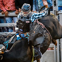 Cain Thomas holds on for 78-point ride during the Gallup Intertribal Indian Ceremonial Rodeo Chute Out Thursday at Red Rock Park in Gallup.