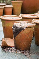 Terracotta pot, planted up with bulbs, cracked by frost