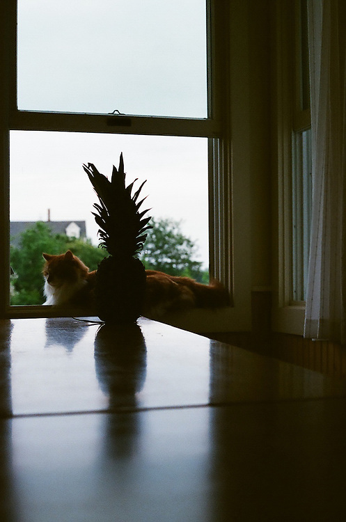 """Fuzzball with Pineapple – 8""""x12"""", 35mm photo print, edition 1/75, 2010"""