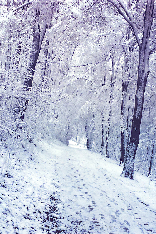Forest path and trees covered in snow - Wuppertal, Germany