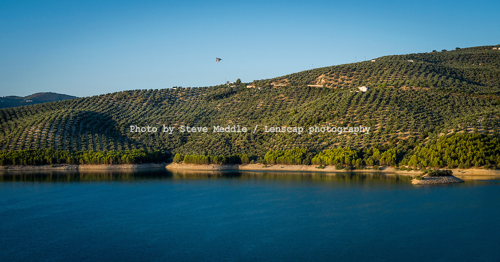 Olive Trees Growing Next to Reservoir, Andalucia, Córdoba, Iznájar, Spain - Aug 2014<br /> <br /> A drought in southern Spain looks set to see a rise in the price of Olive Oil.<br /> Southern Spain is the world's biggest producer of Olives