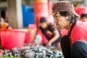 30 APRIL 2013 - MAHACHAI, SAMUT SAKHON, THAILAND:   A Burmese crewman sorts and grades fresh caught mackerel in Mahachai, Samut Sakhon province, Thailand. The Thai fishing industry is heavily reliant on Burmese and Cambodian migrants. Burmese migrants crew many of the fishing boats that sail out of Samut Sakhon and staff many of the fish processing plants in Samut Sakhon, about 45 miles south of Bangkok. Migrants pay as much $700 (US) each to be smuggled from the Burmese border to Samut Sakhon for jobs that pay less than $5.00 (US) per day. There have also been reports that some Burmese workers are abused and held in slavery like conditions in the Thai fishing industry.         PHOTO BY JACK KURTZ