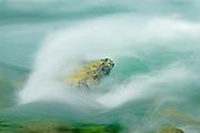 Wavemaker in the Sauk River, Washington State