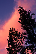 Sunset light on clouds over pine trees, Tahoe National Forest, California