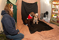 Brittney Peterson watches as Moose and Dunkin pose for their Christmas portrait at Prescott's Florist on Saturday afternoon with a contribution going to the New Hampshire Humane Society .  (Karen Bobotas/for the Laconia Daily Sun)