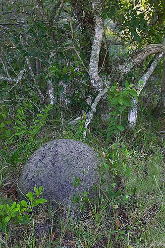 South America, Uruguay, Rocha, Laguna Negra, forest, grassland, termite mound