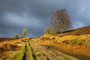 Dramatic storm light on Jumble Road, Houndkirk Moor, below a dark  and thunderous winter sky. On the boundary of Sheffield in the Peak District National Park, South Yorkshire. February, 2015.