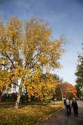 Autumn in Kew Gardens, London. Fall leaves on the many different types of trees at the Royal botanical gardens turn to yellow and brown before dropping.