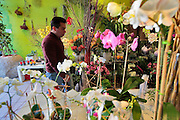 A man walks into the Harlem Flo flower atelier on Frederick Douglass Blvd in Harlem.  Harlem, a neighborhood of New York City in Manhattan, began as a Dutch village in 1658 and was later annexed to New York City in 1873.  At the beginning of the 20th century African-American's began arriving from the southern American states looking for work in the more industrious north.  With their migration, the African-American community brought with them a renaissance in the arts to Harlem that is still evident today.  After World War II Harlem began experiencing a significant rise in crime and poverty due to the Great Depression that lasted until the 21st century.  A new pride in the community has brought a renewed revival to Harlem, and crime rates have dropped to record lows giving the New York City neighborhood a new lease on life.