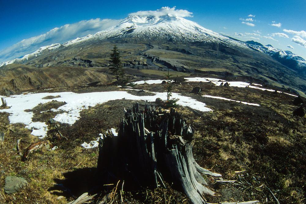 Stump and Mt. St. Helens (Fisheye), Mt. St. Helens National Volcanic Monument, Washington, US