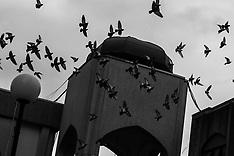 2020-02-23-Mosque_