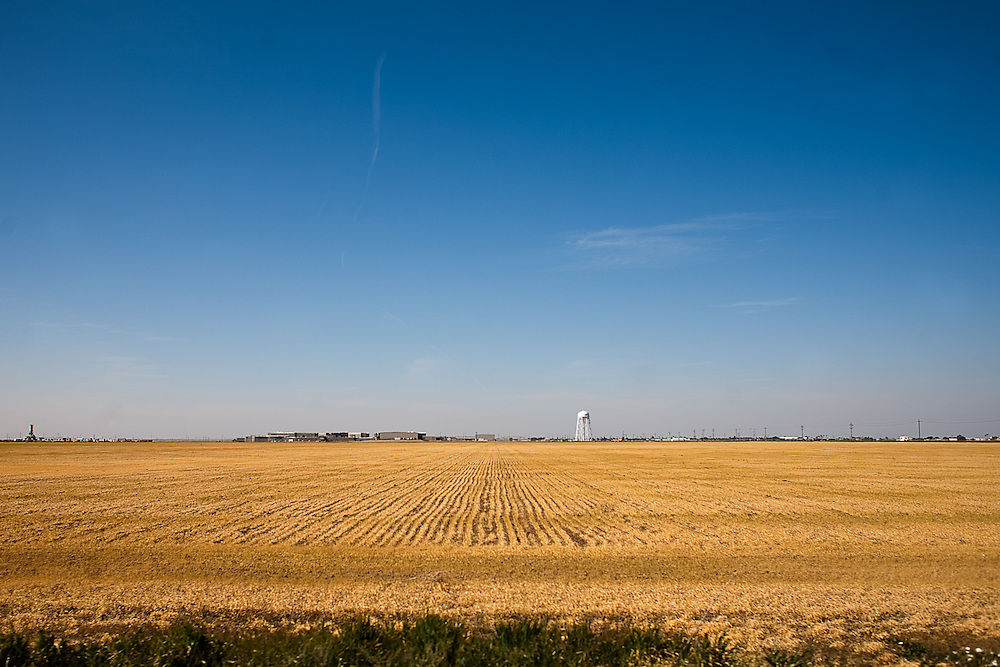 A farmer has let a low valley crop dry an die in the San Joaquin Valley.  A water tower can be seen in the background.  April 17, 2009