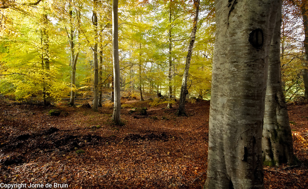 A forest in autumn colours in the Cairngorms National Park, Scotland