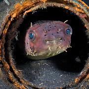 Fish Photos