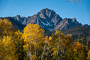 Mt Sneffels rises above yellow fall aspen colors along Ouray County Road 5, in Uncompahgre National Forest, Ridgway, Colorado, USA.
