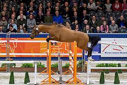 209, Merlijn H<br /> KWPN hengstenkeuring - 's Hertogenbosch 2020<br /> © Hippo Foto - Dirk Caremans<br />  29/01/2020