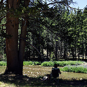 A woman sits in the shade of a tree along the Tuolumne River in Yosemite National Park