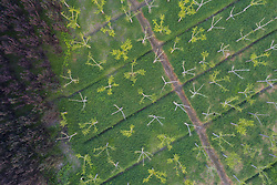August 27, 2017 - Nanton, Nanton, China - Nantong, CHINA-27th August 2017: (EDITORIAL USE ONLY. CHINA OUT) ..Aerial photography of artificial forest along the highway in Nantong, east China's Jiangsu Province. (Credit Image: © SIPA Asia via ZUMA Wire)