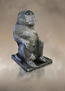 Plaster cast of an ancient Egyptian Thot Baboon statue, reign of Nectanebo (359-342 BC). Campo Marizo, temple of Isis. Egyptian Museum, Turin. <br /> <br /> The original is in the Capitoline Museum Rome. The baboon is an image of Thot, lunar God, creator of hieroglyphic writing and patron of science. .<br /> <br /> If you prefer to buy from our ALAMY PHOTO LIBRARY  Collection visit : https://www.alamy.com/portfolio/paul-williams-funkystock/ancient-egyptian-art-artefacts.html  . Type -   Turin   - into the LOWER SEARCH WITHIN GALLERY box. Refine search by adding background colour, subject etc<br /> <br /> Visit our ANCIENT WORLD PHOTO COLLECTIONS for more photos to download or buy as wall art prints https://funkystock.photoshelter.com/gallery-collection/Ancient-World-Art-Antiquities-Historic-Sites-Pictures-Images-of/C00006u26yqSkDOM